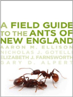 field-guide-to-ants