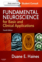 fundamental-neuroscience